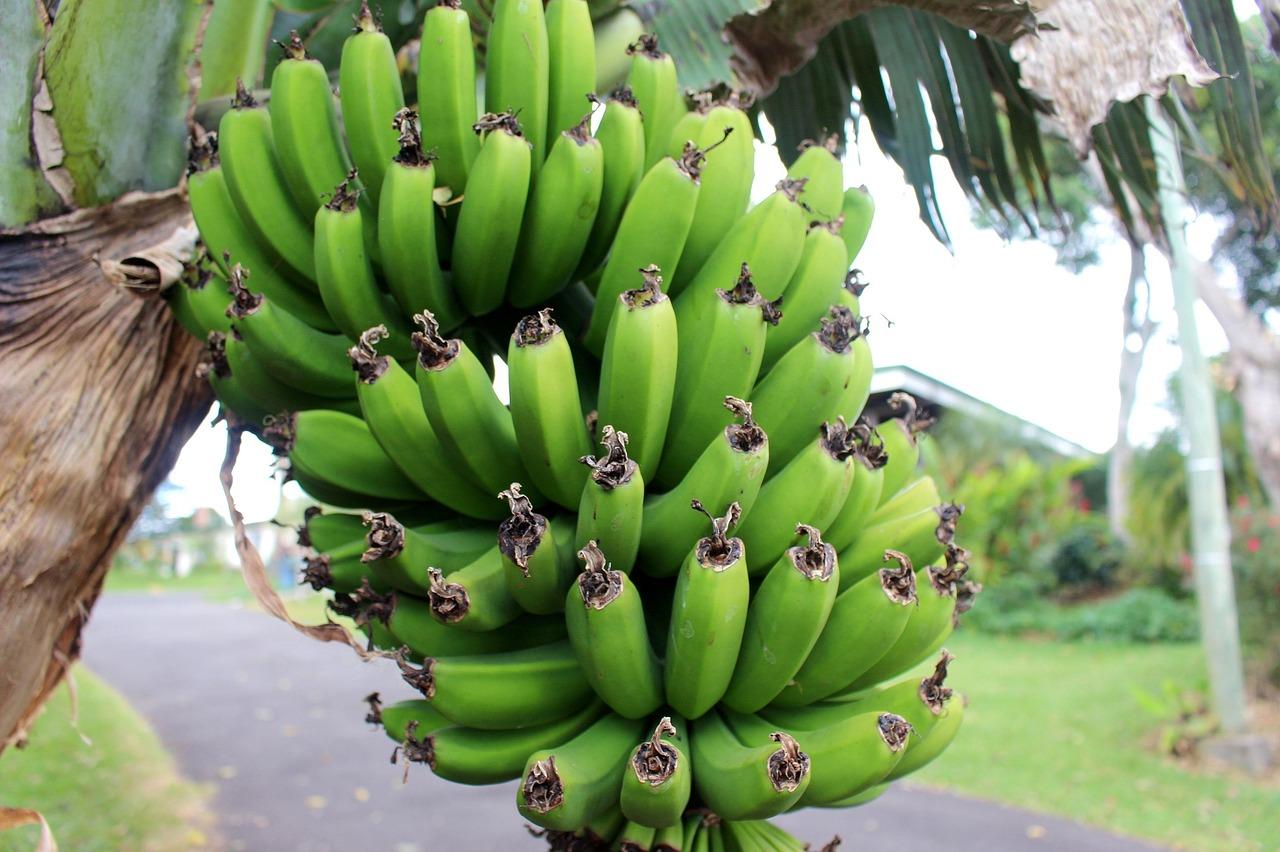 Banány-zelené-pixabay-Tělo-a-duše-v-harmonii